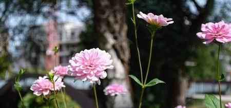 آریان گل همیشه بهار