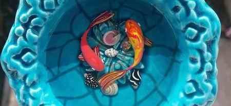 امیر عظیمی ماهی قرمز