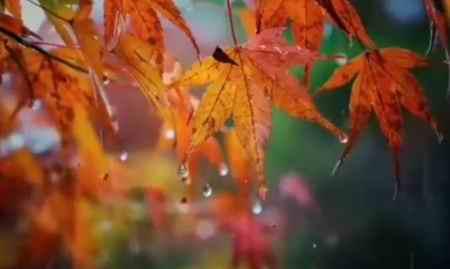 سیروان خسروی بارون پاییزی