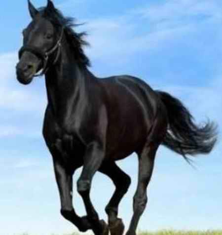 متن آهنگ اسب سیاه مو تاختم دیشب قمارو باختم رحیم لطفی